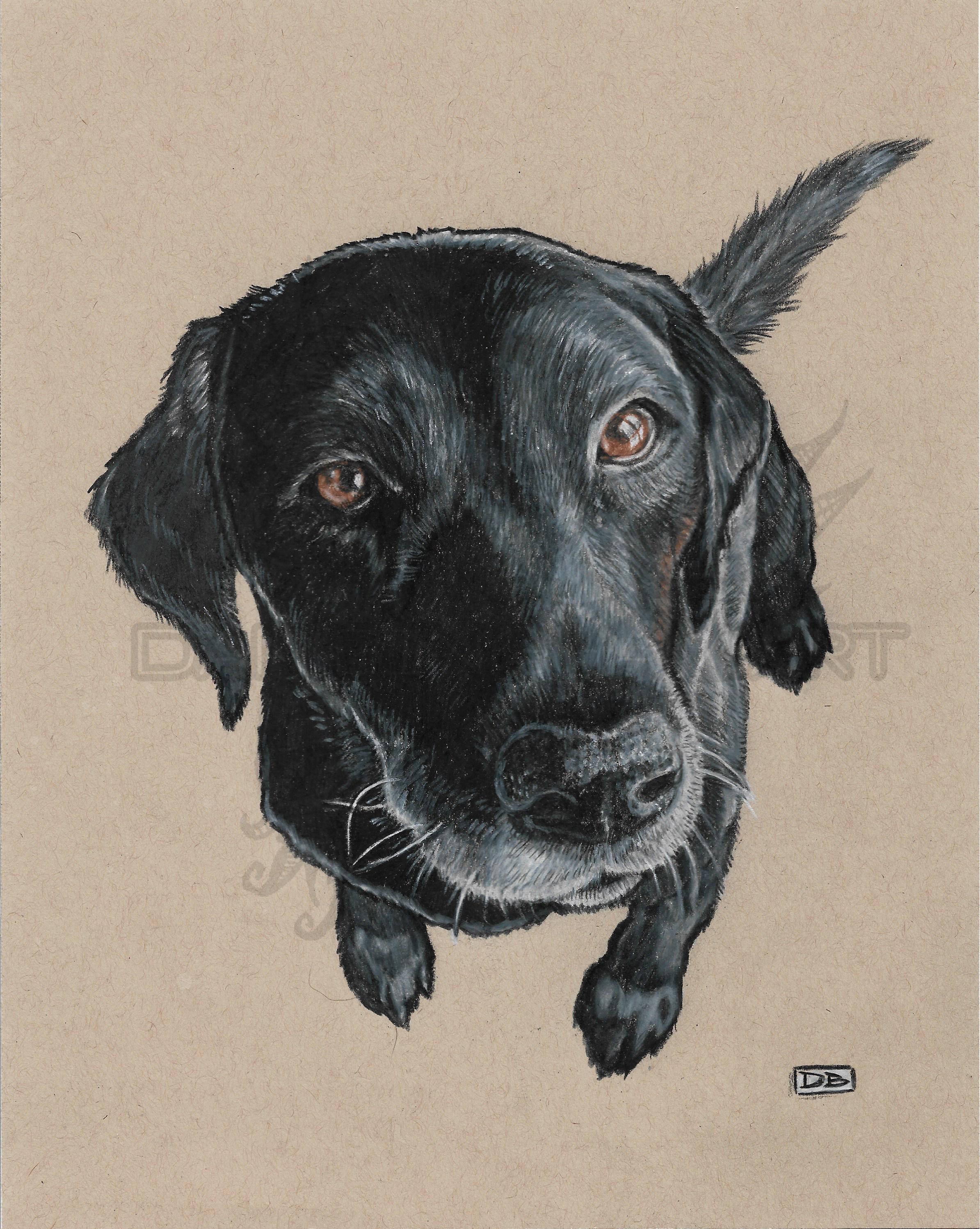 Susie Pet Portrait Commission