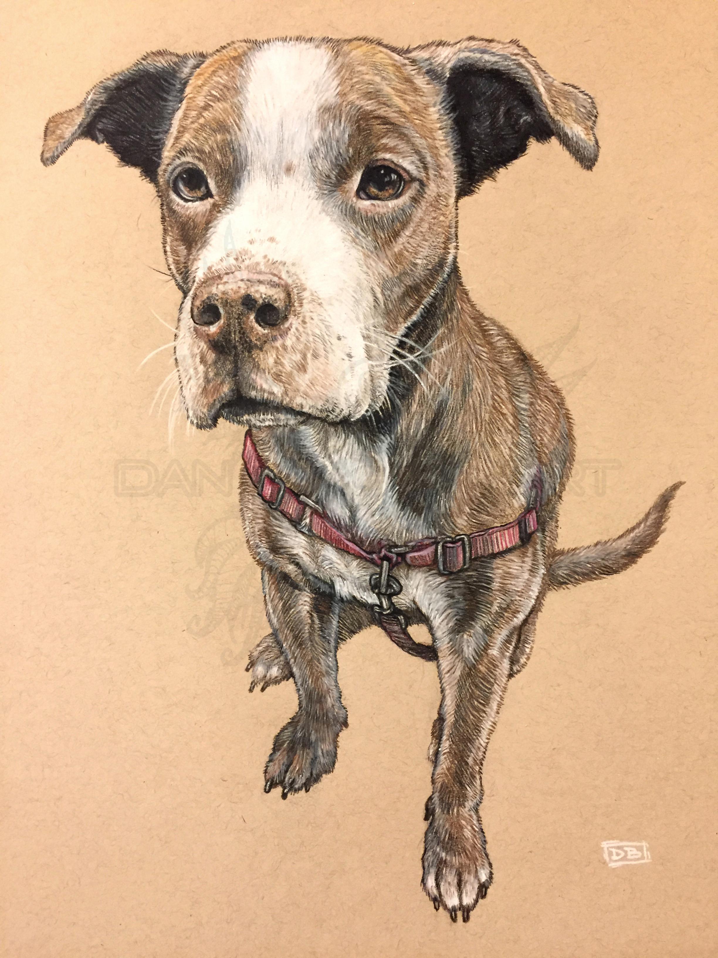 Byrce Pet Portrait Commission