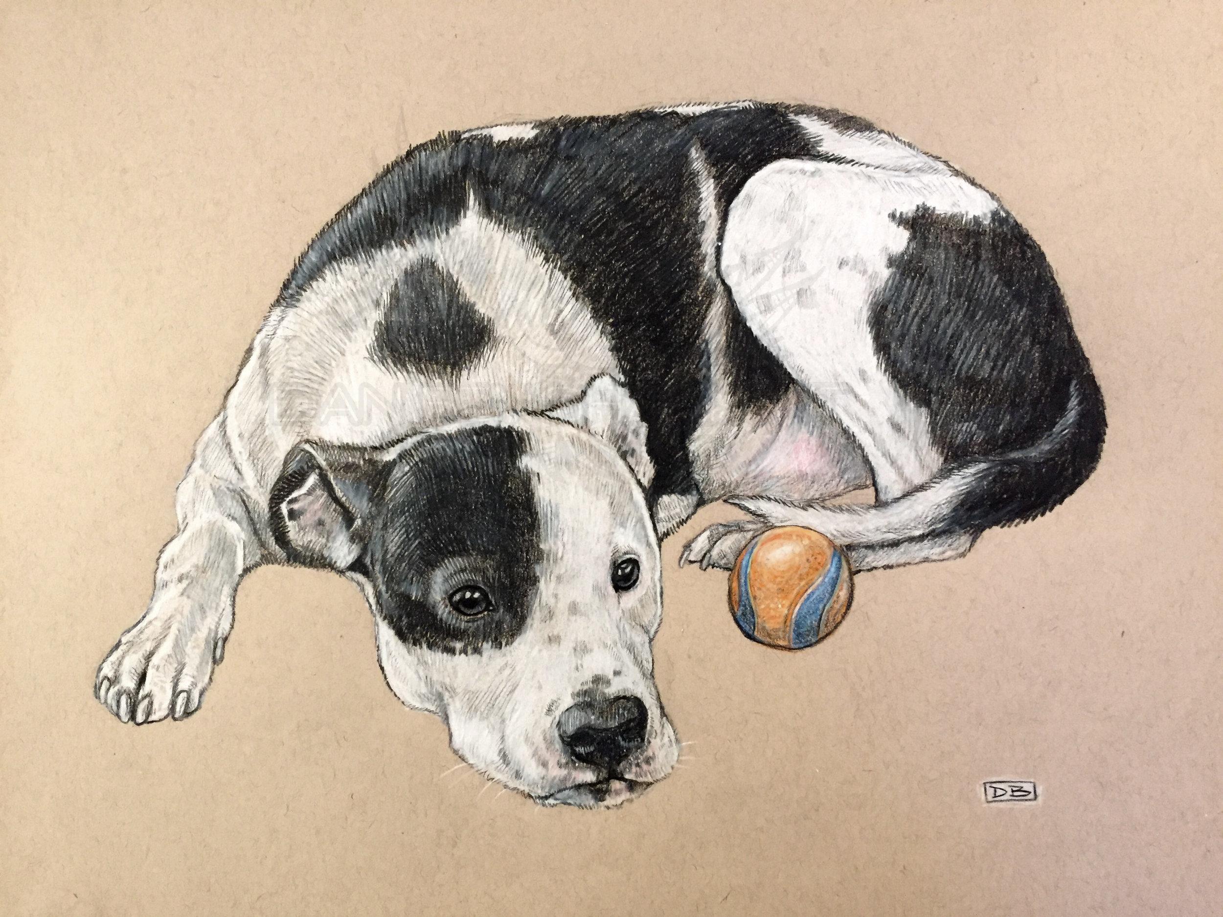 Petey Pet Portrait Commission