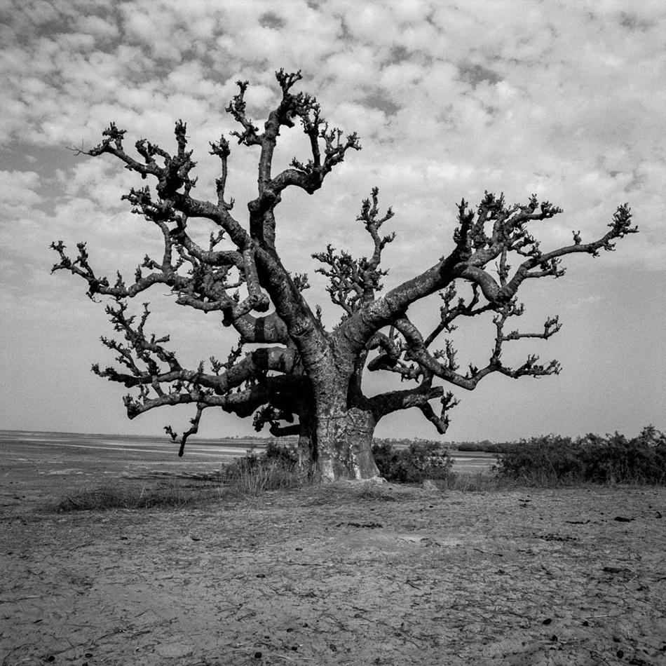 baobab-2.jpg