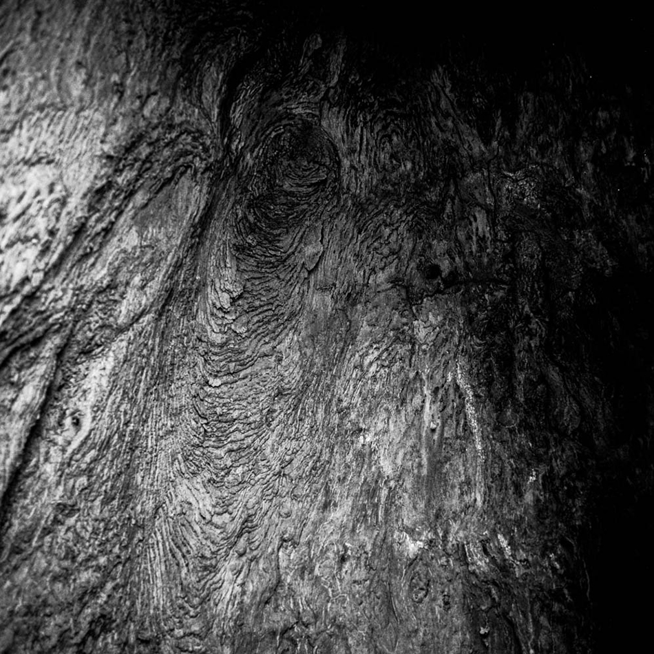 baobab-3.jpg