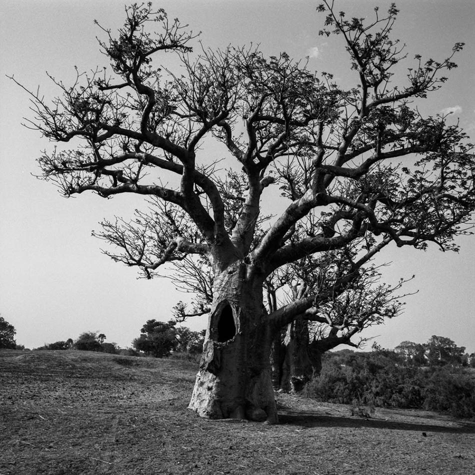 baobab-4.jpg