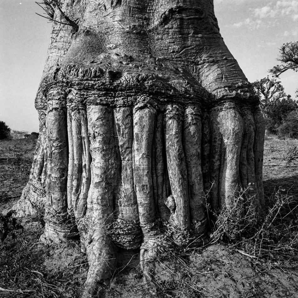 baobab-5.jpg