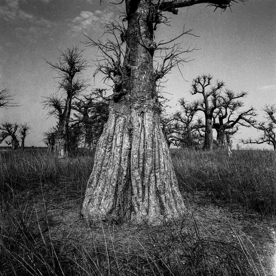 baobab-10.jpg