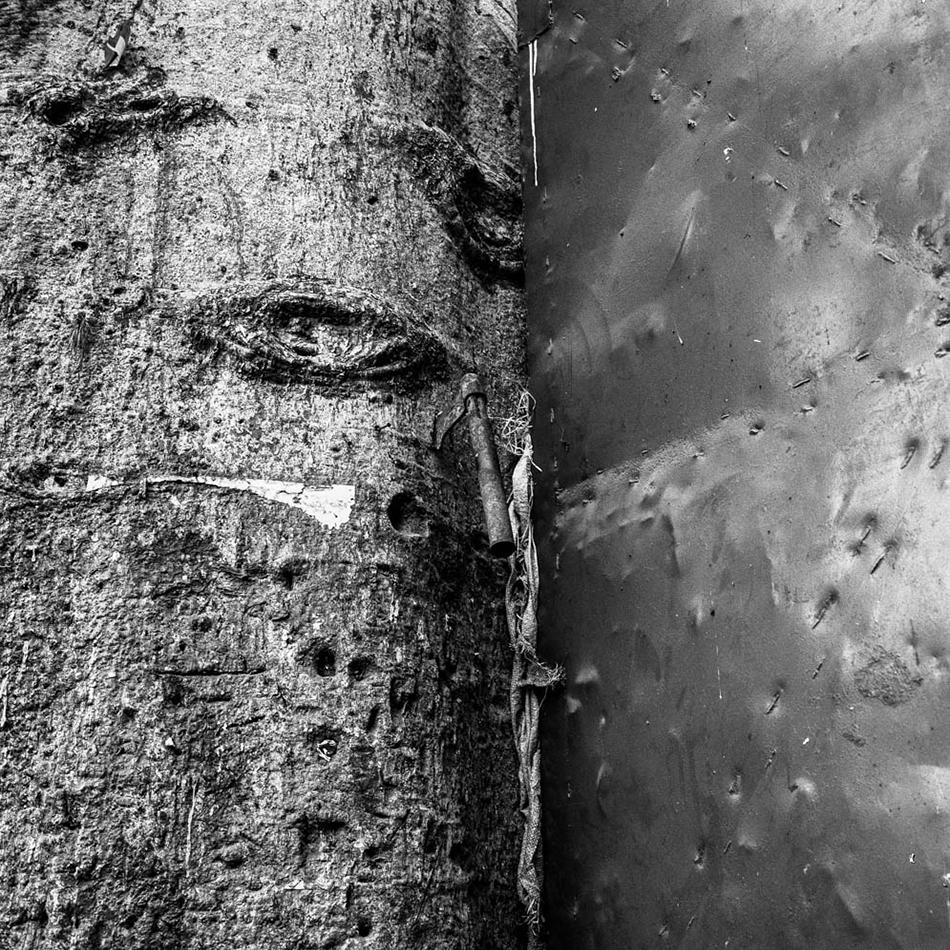 baobab-15.jpg