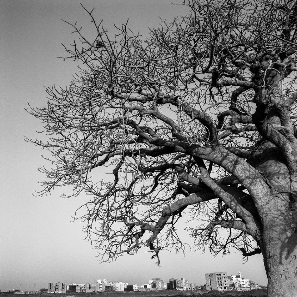 baobab-18.jpg