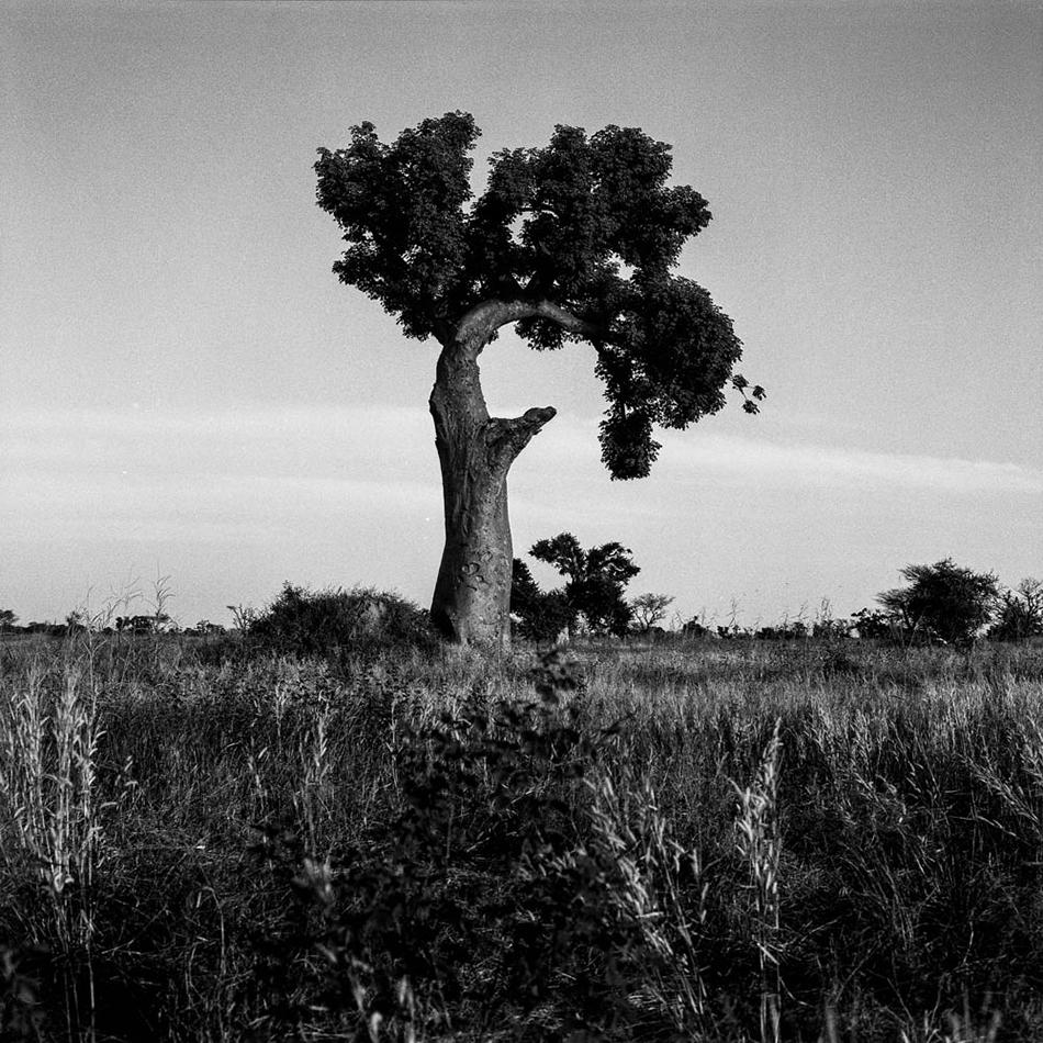 baobab-29.jpg