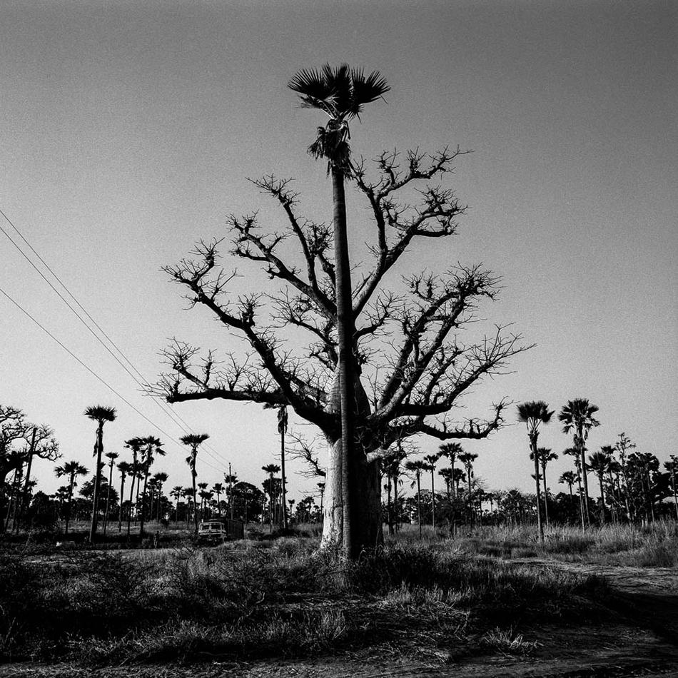baobab-34.jpg