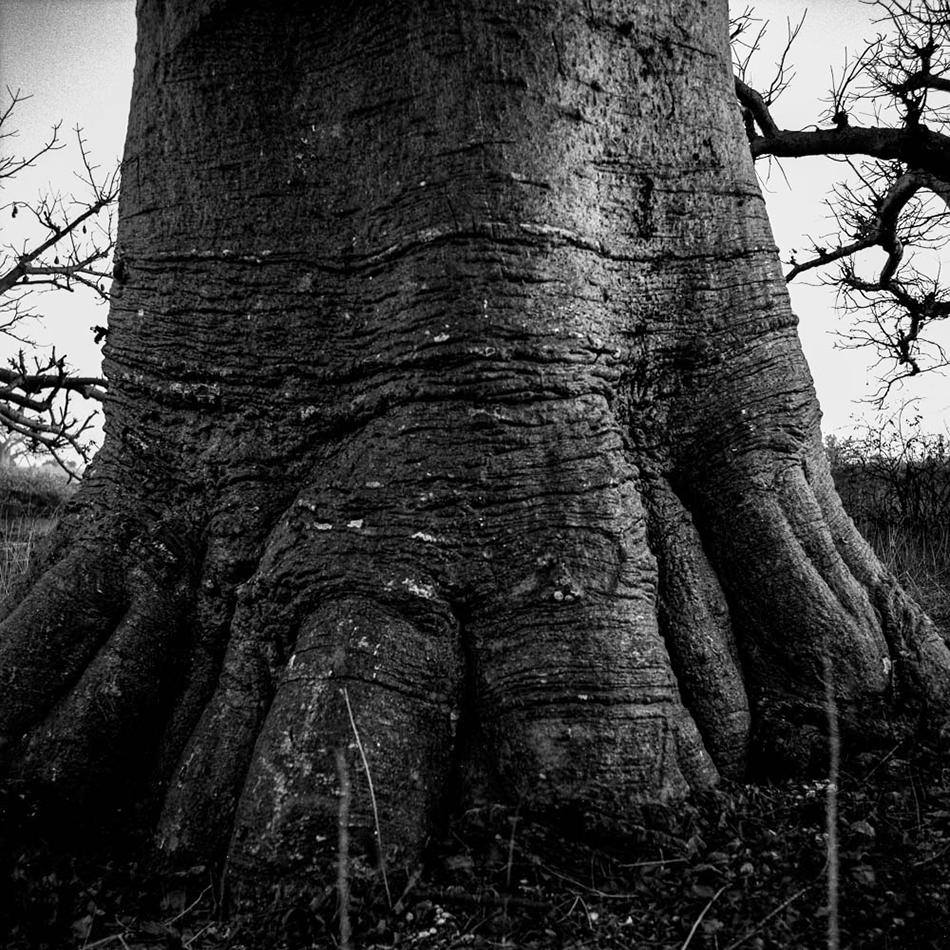 baobab-31.jpg