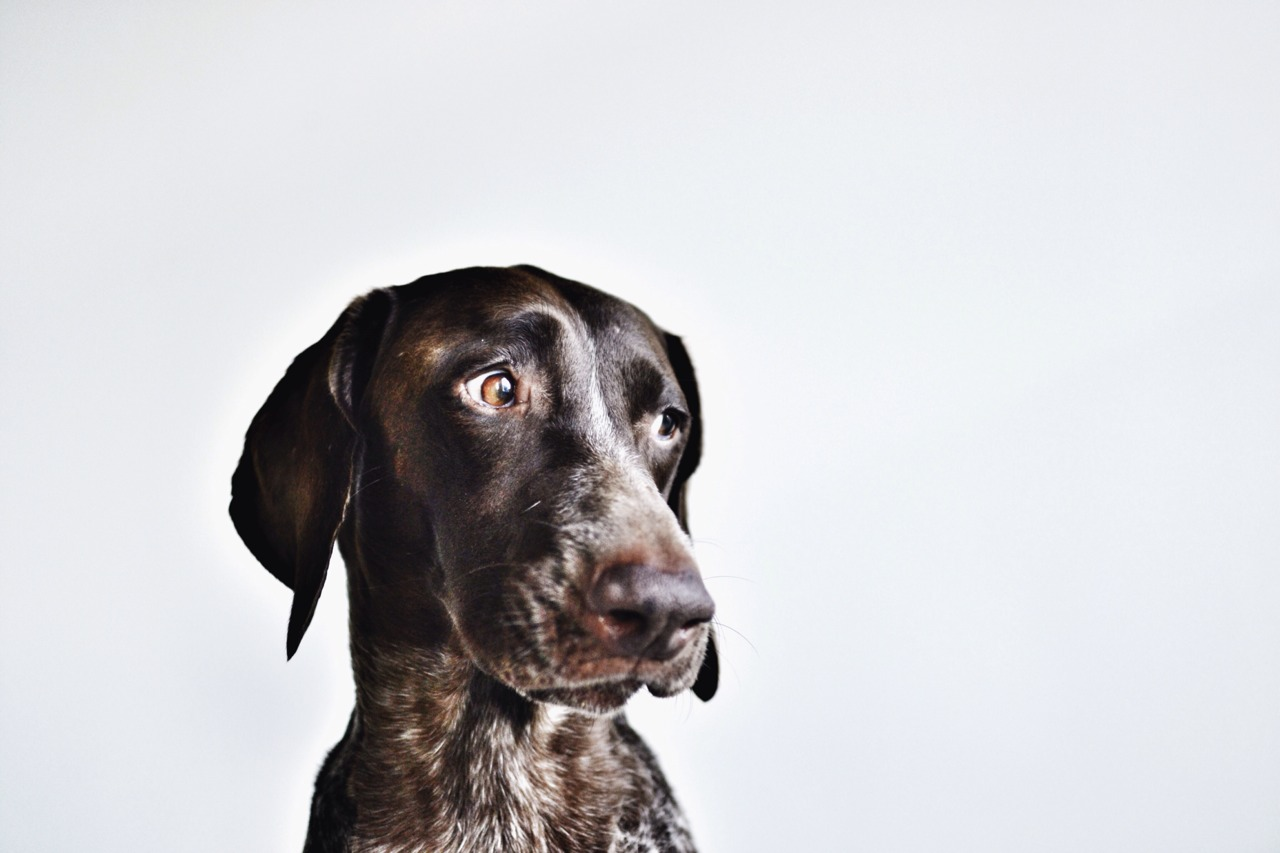 We didn't want to put a boring picture of a chart or laptop so in Saagmeister style heres a hound.