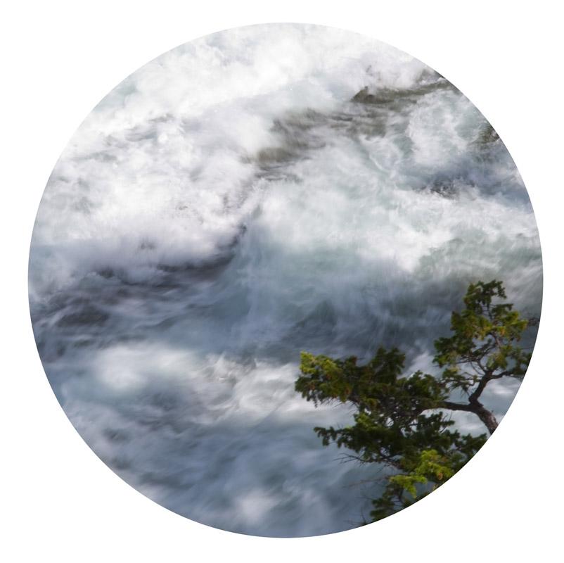 banff-water-tree-.jpg