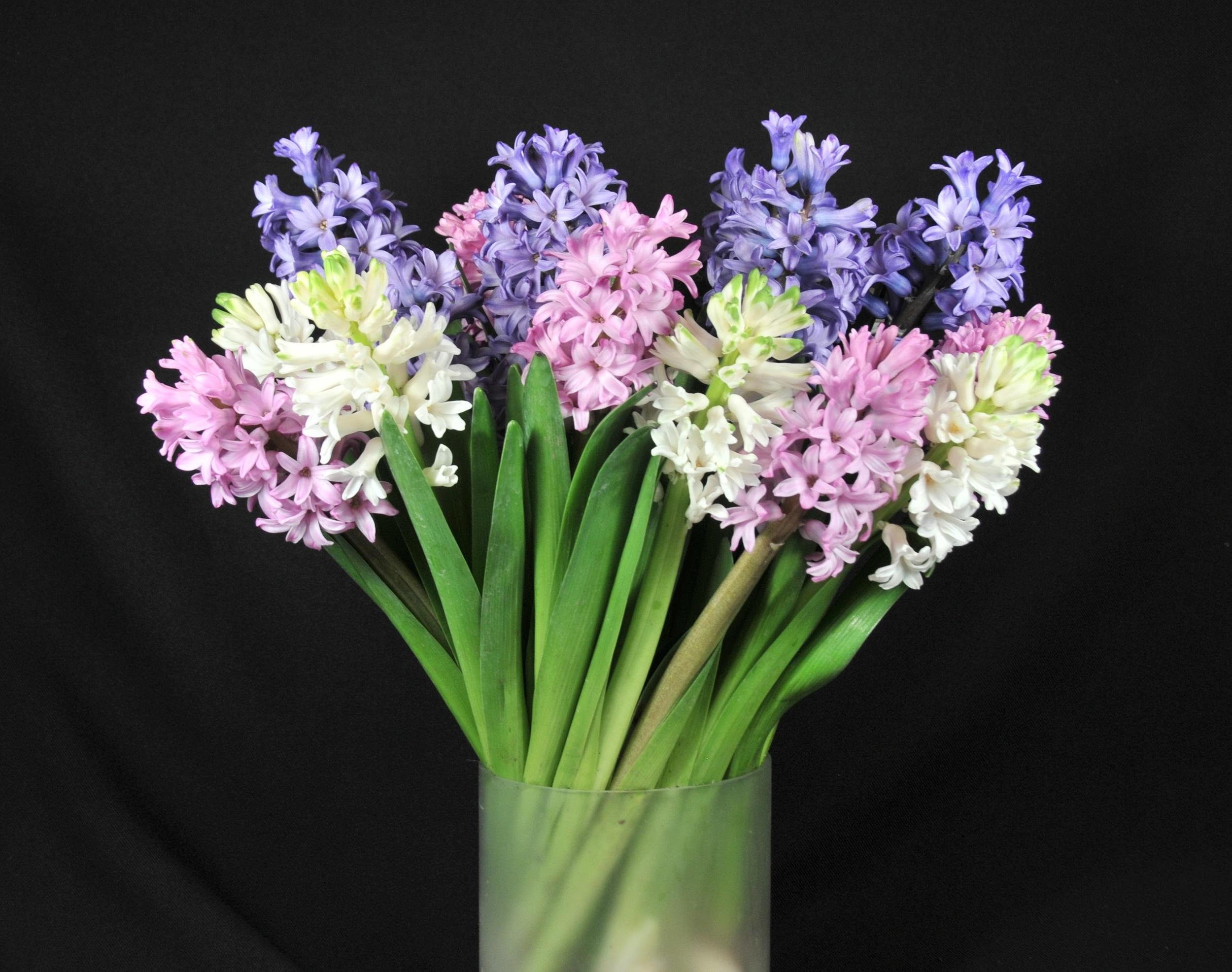 hyacinth collection.jpg