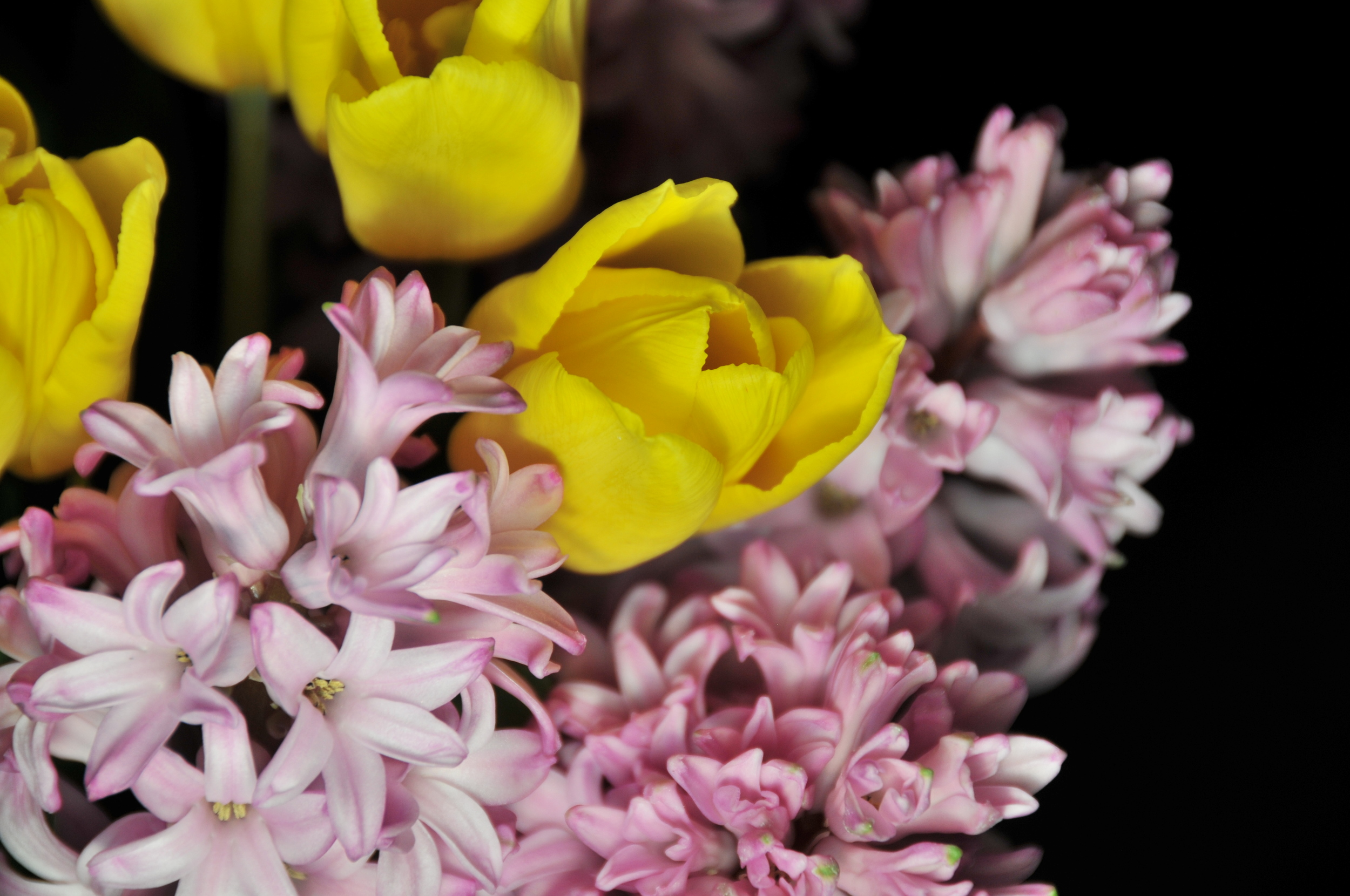 Yellow Tulips and Pink Hyacinths