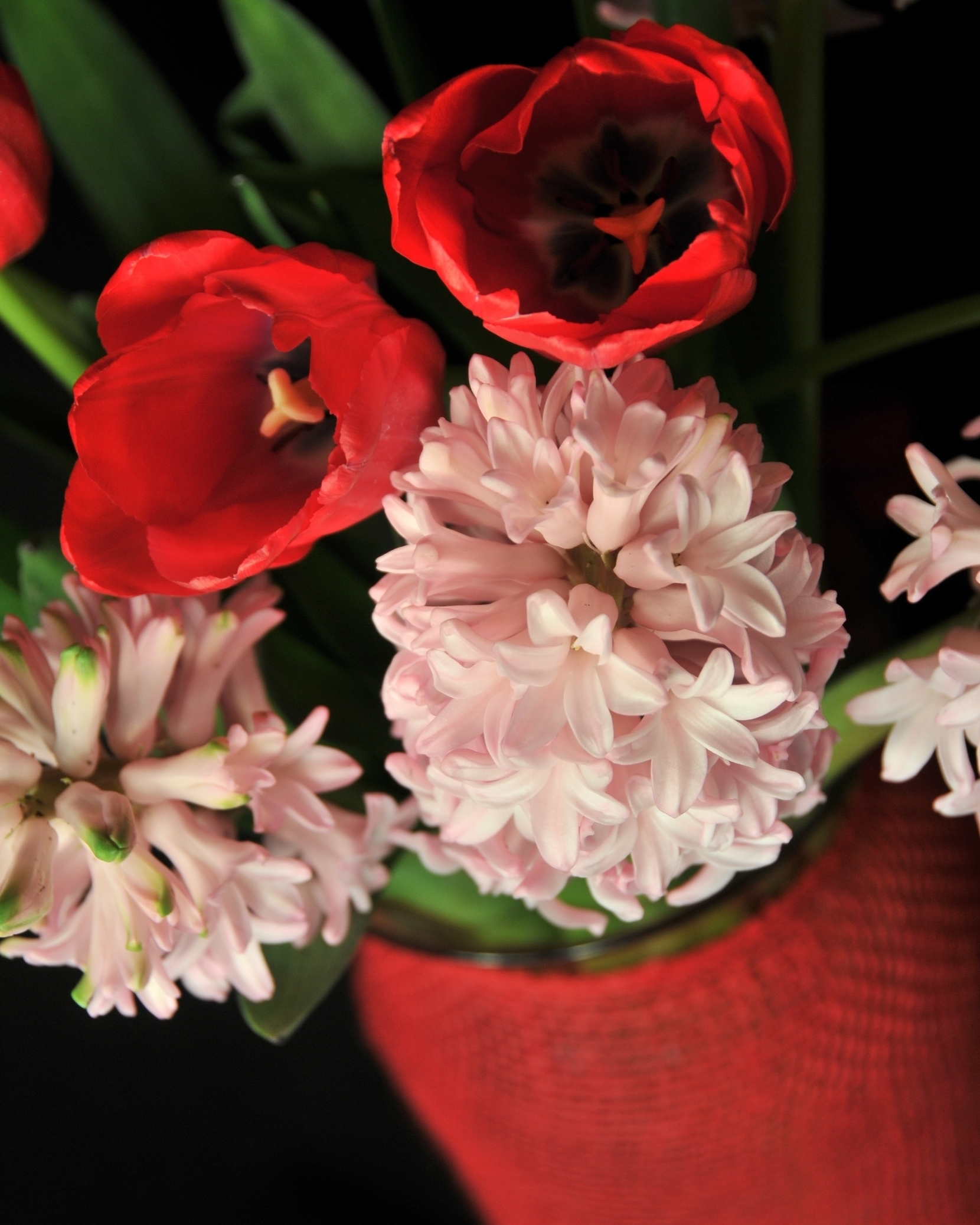 Red and Pink hyacinth and tulip combination