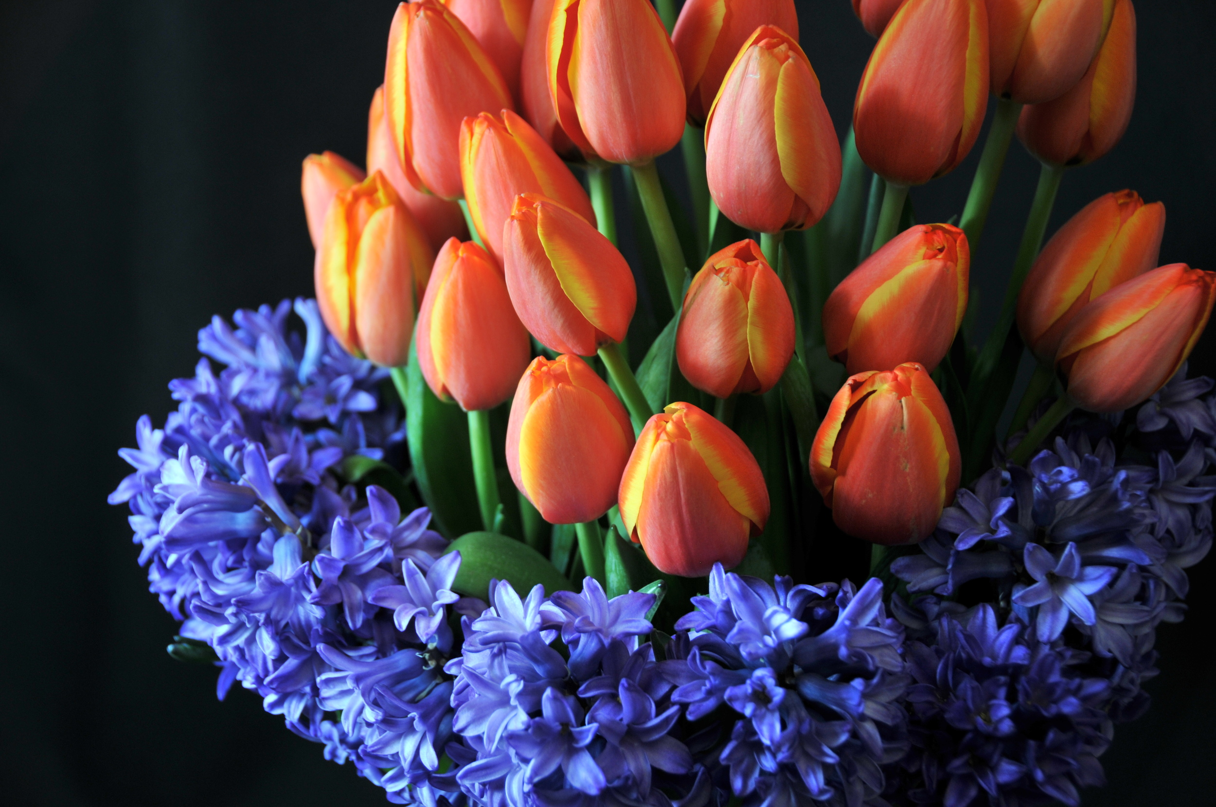 """The tulips natural stretching was accentuated by stones in the bottom of the vase, so it looks like tulips with a hyacinth """"collar""""."""