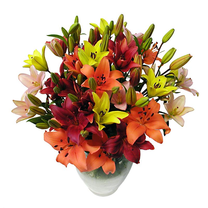 multi-color asiatic lilies