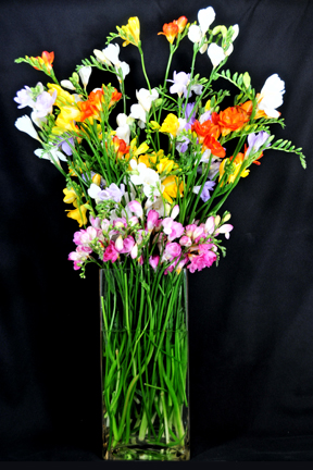 This mixed bouquet is an excellent example of freesia's versatile stem lengths.