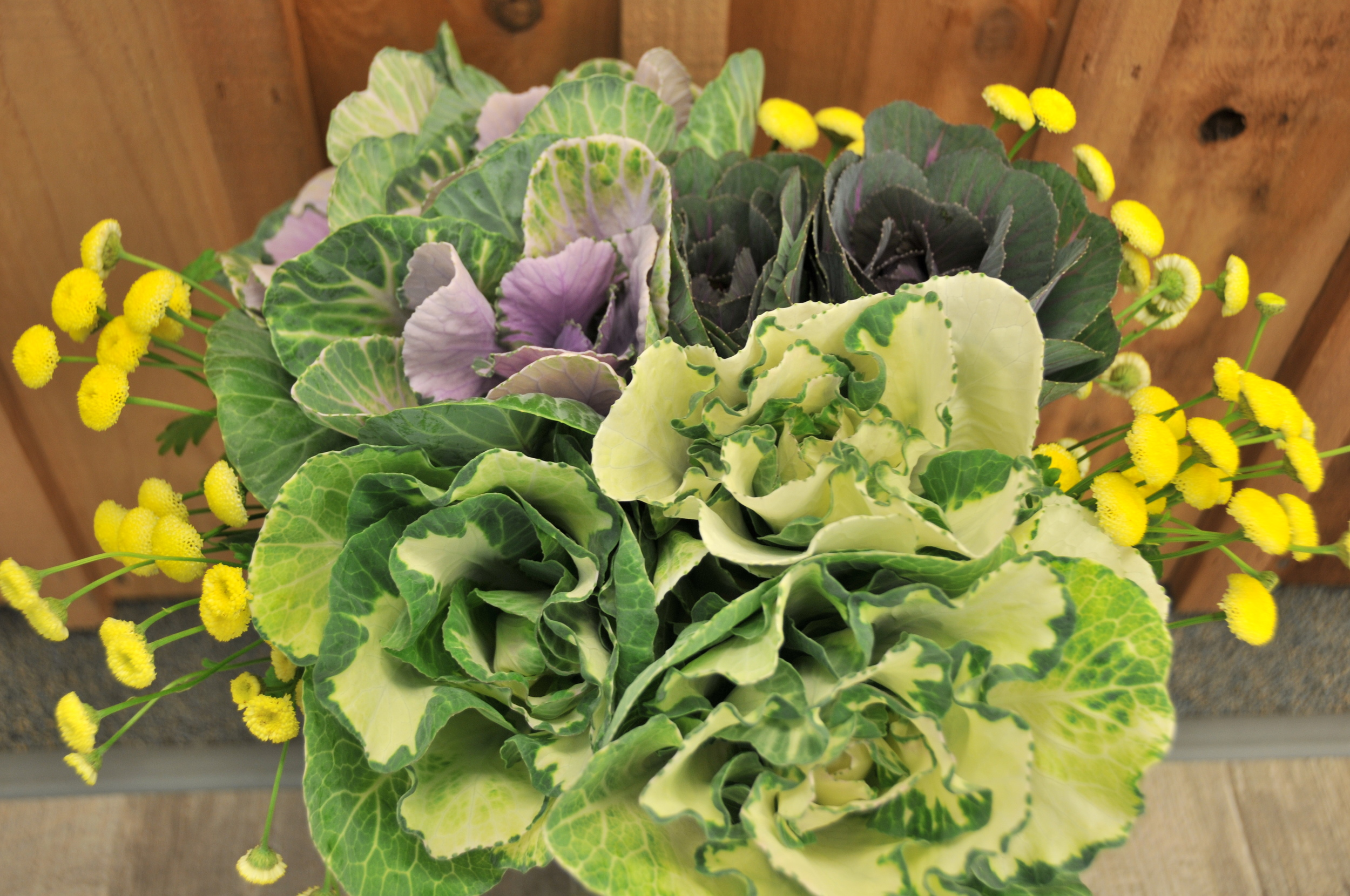 brassica bouquet