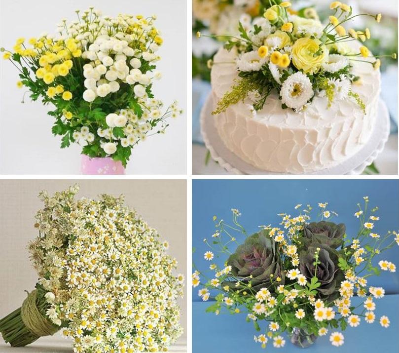 matricaria flower design
