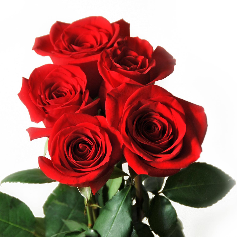 bloomexpert.com rose