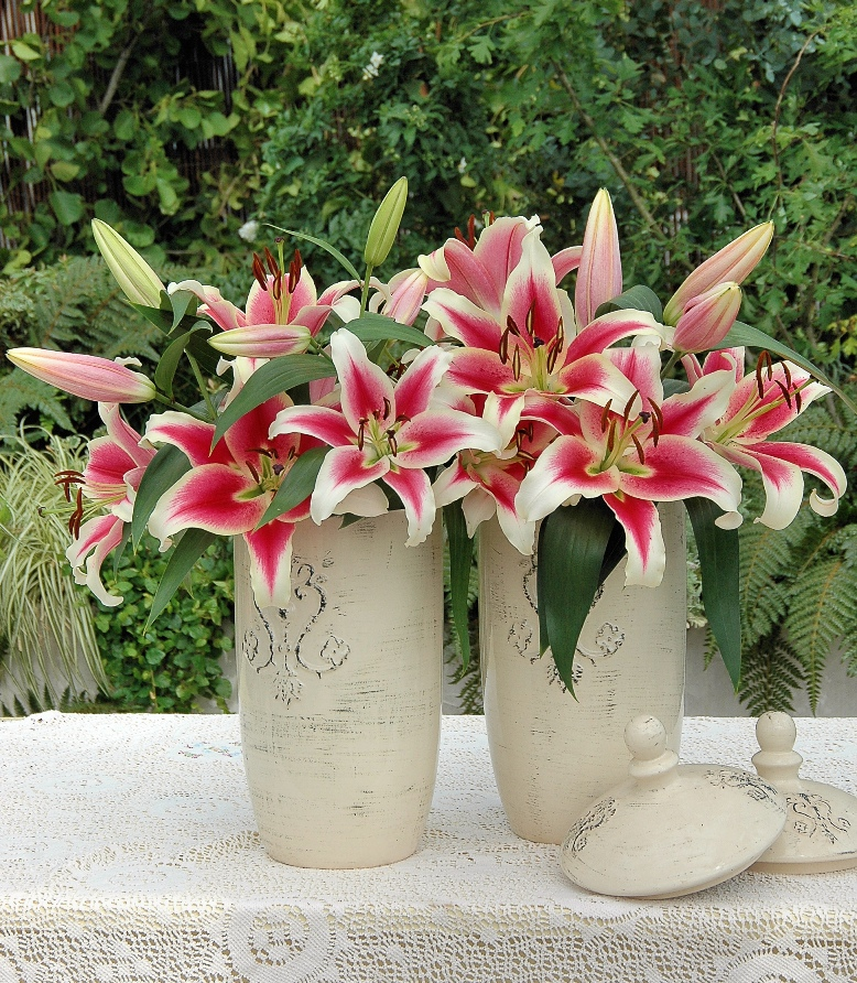Oriental Lilies in the home