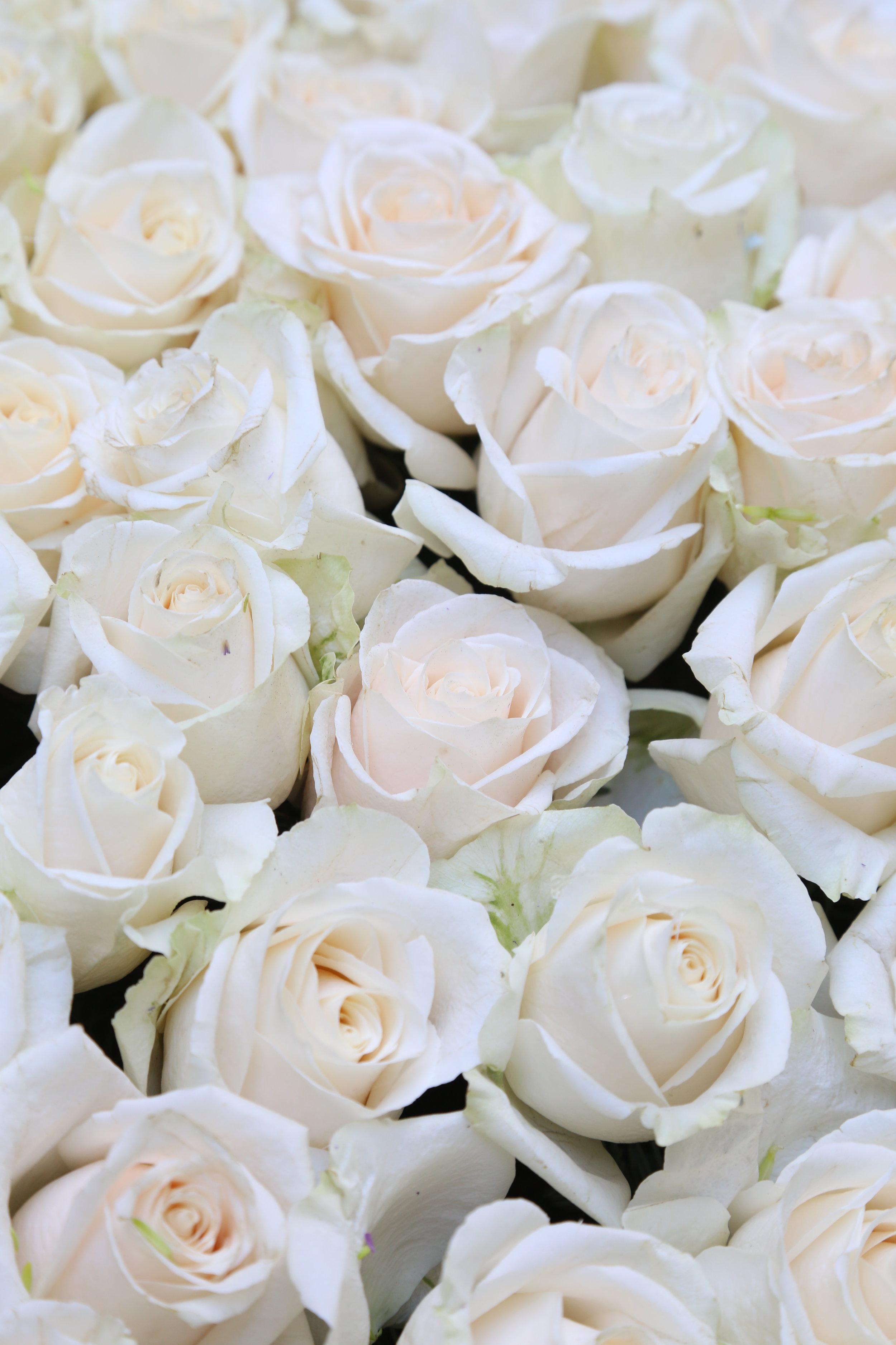 bloomexpert white roses