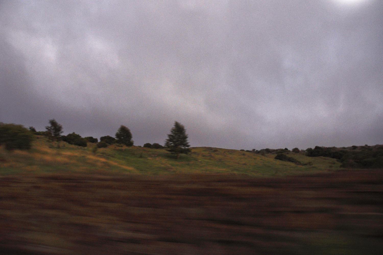 hana_tree_blur.jpg
