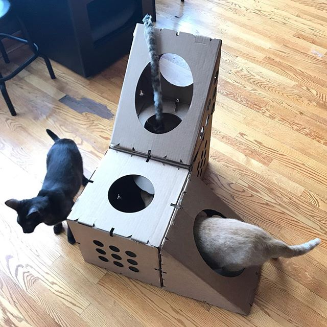 3 days left on the #boxesforhappiness #kickstarter. Get your furry friend a treat, and help your fave #chicago #catshelter
