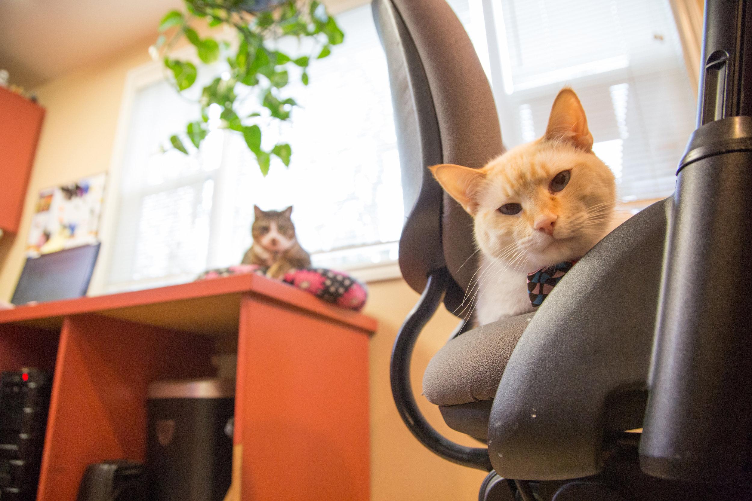Lifestyle Photography Tualatin Vet Clinic CAT.jpg