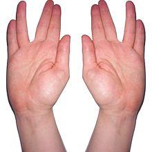 220px-Kohanim_hands_blessing_photo.jpg
