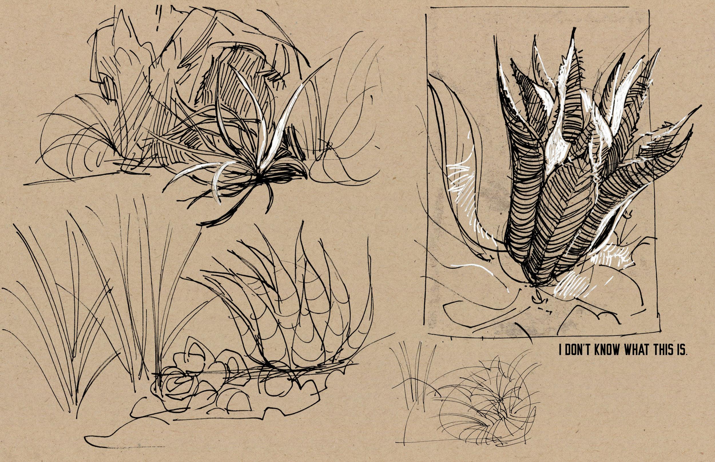 plants06.jpg