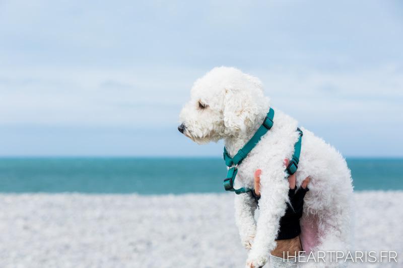 Photographer in Paris postcards beach fecamp poodle boo iheartparisfr