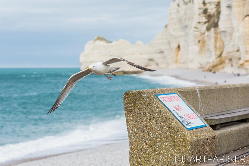 Photographer in Paris postcards etretat seagull iheartparisfr