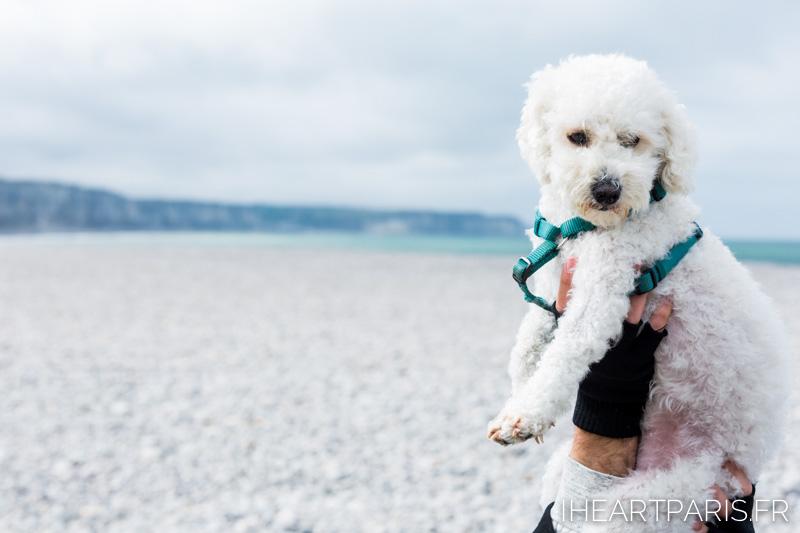 Photographer in Paris postcards fecamp poodle boo iheartparisfr