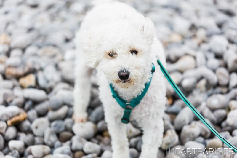 Photographer in Paris postcards poodle beach  iheartparisfr