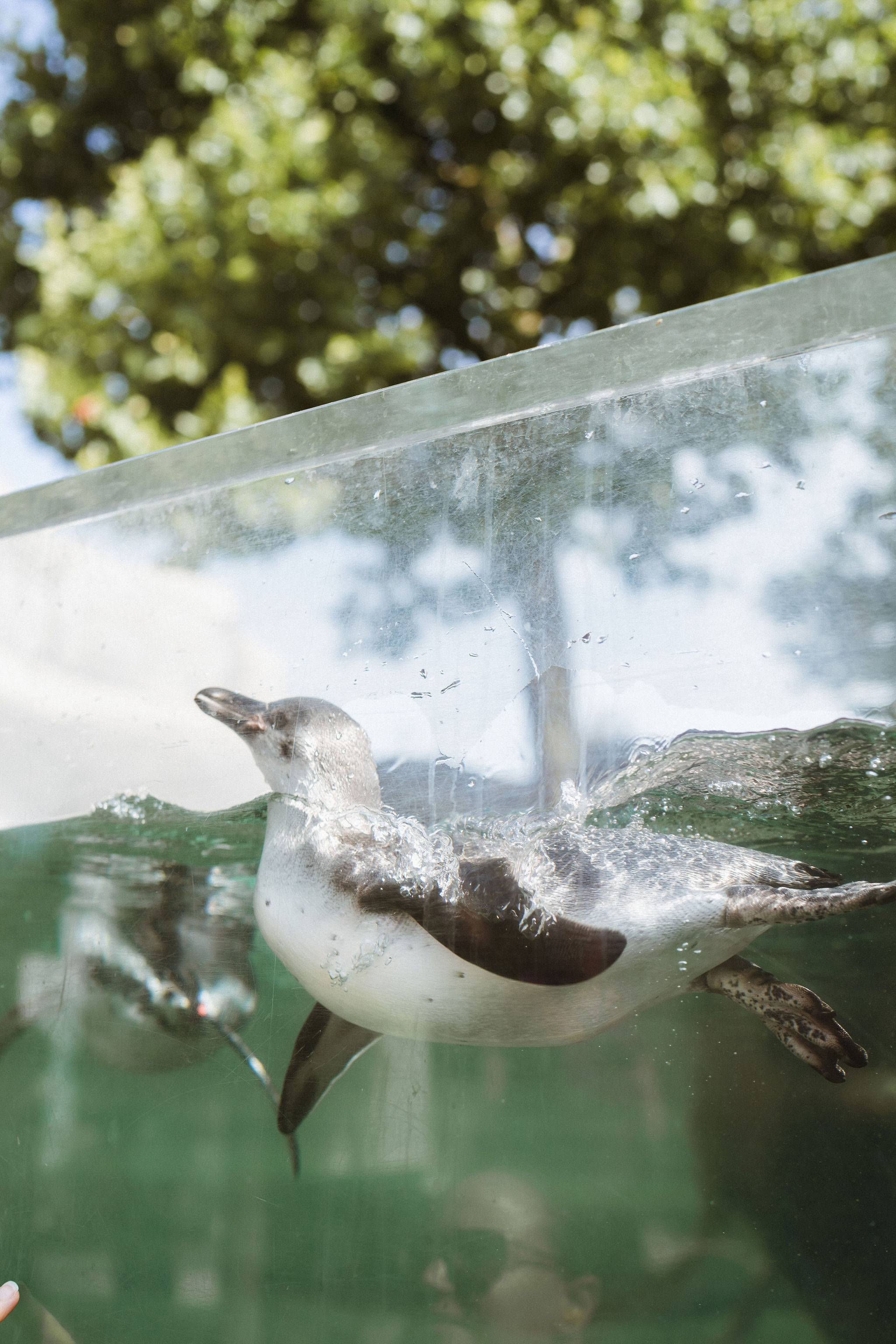Paris zoo penguins photographer iheartparis.jpg