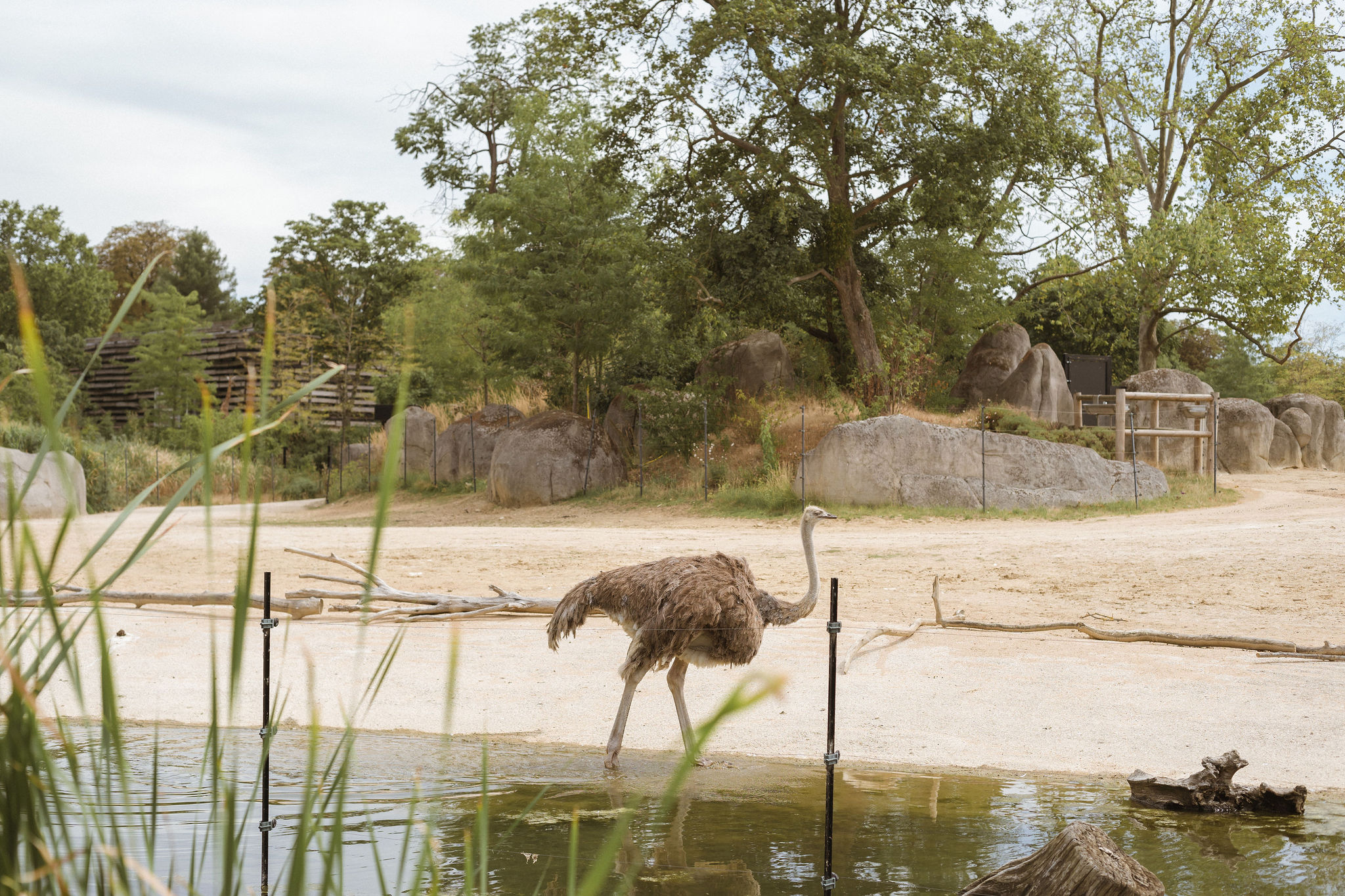paris zoo ostrich photographer iheartparis.jpg