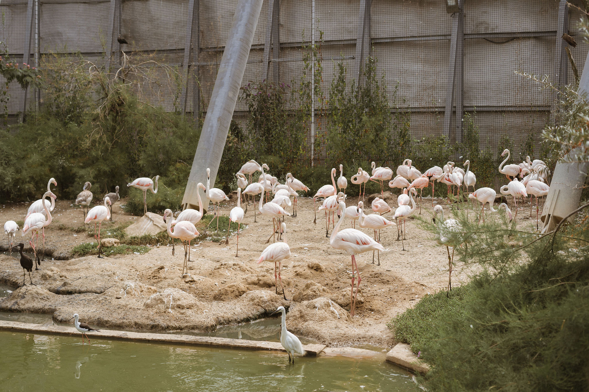 would you be my flamingo iheartparisfr.jpg