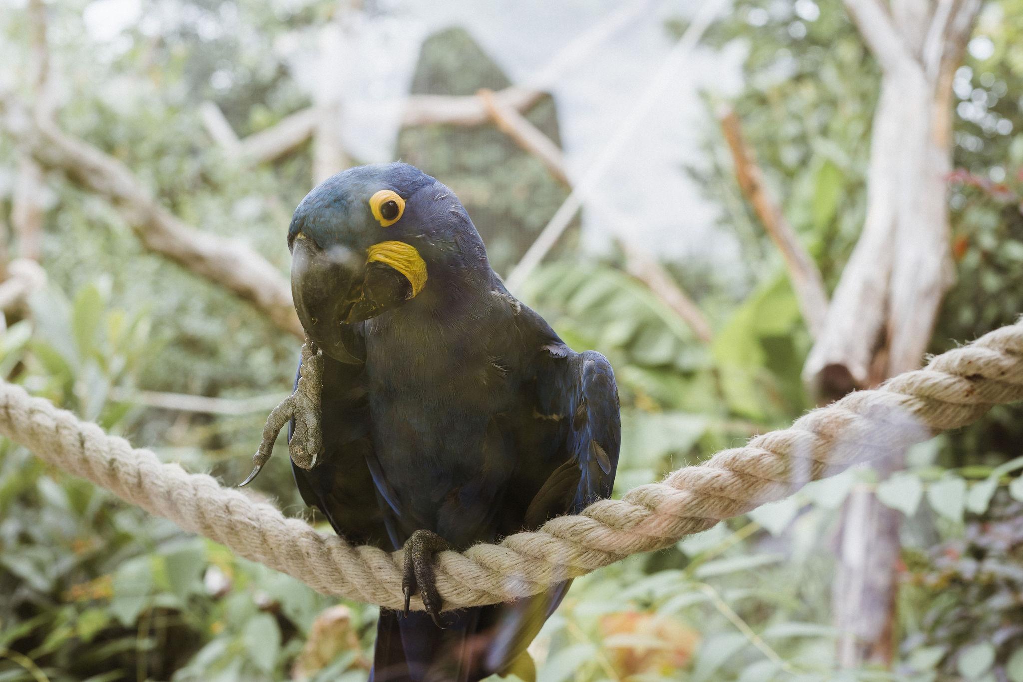 paris zoo macaw iheartparisfr.jpg