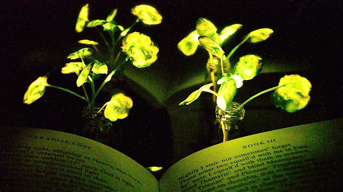 MIT-glowing-plants-dezeen-hero.jpg