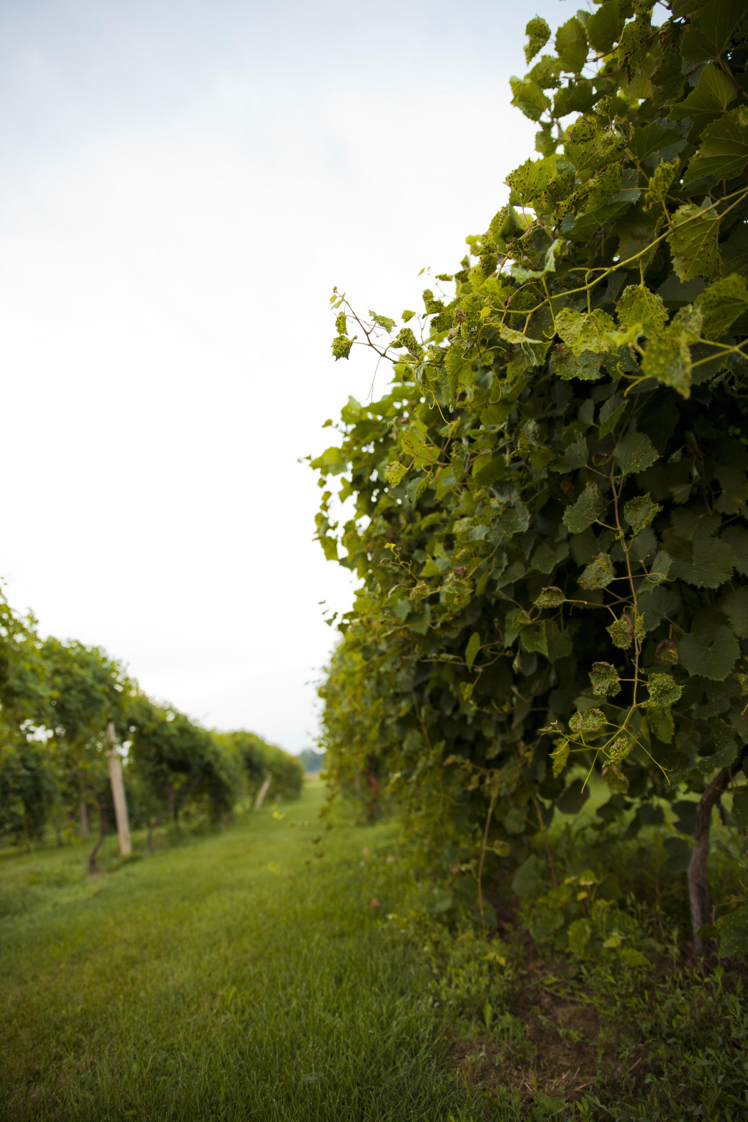 buck_creek_winery_ (106).JPG