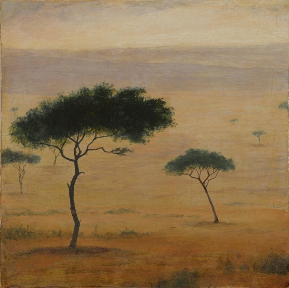 Acacia Dreaming II