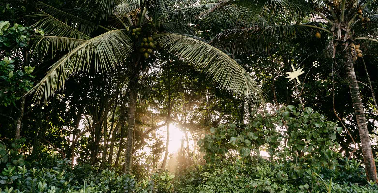 Mawamba Lodge   Vida silvestre impresionante    Tortuguero, Costa Rica