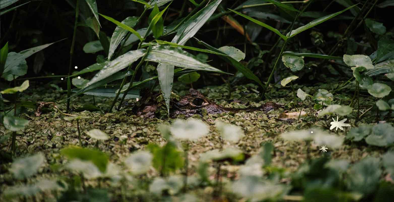 Mawamba Lodge   Ríos, lagos y canales que se interconectan para crear un maravilloso ambiente    Tortuguero, Costa Rica