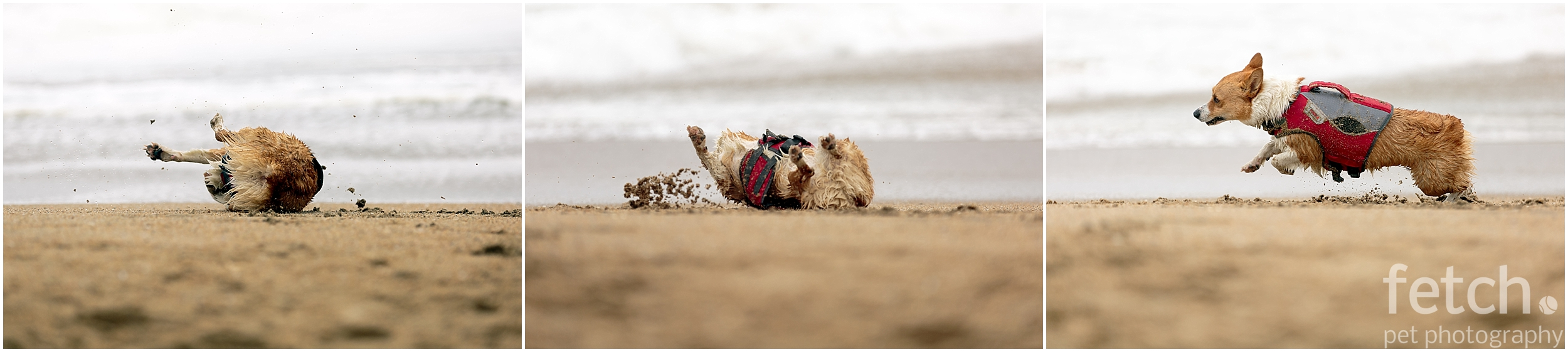 dog-rolls-in-sand-on-beach