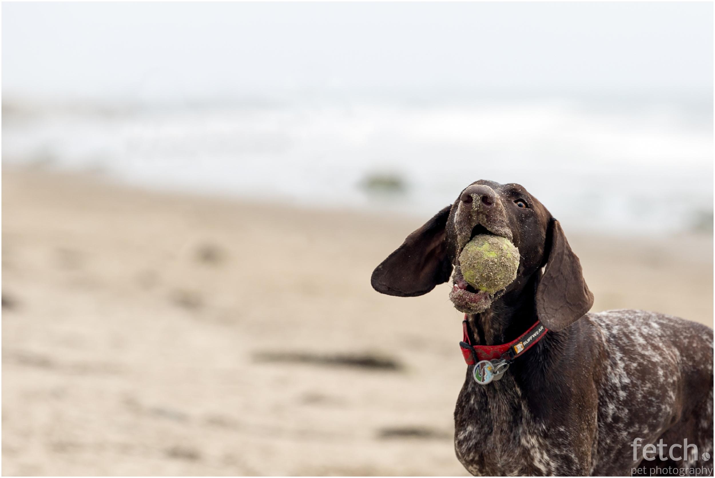 dog-photographer-los-angeles