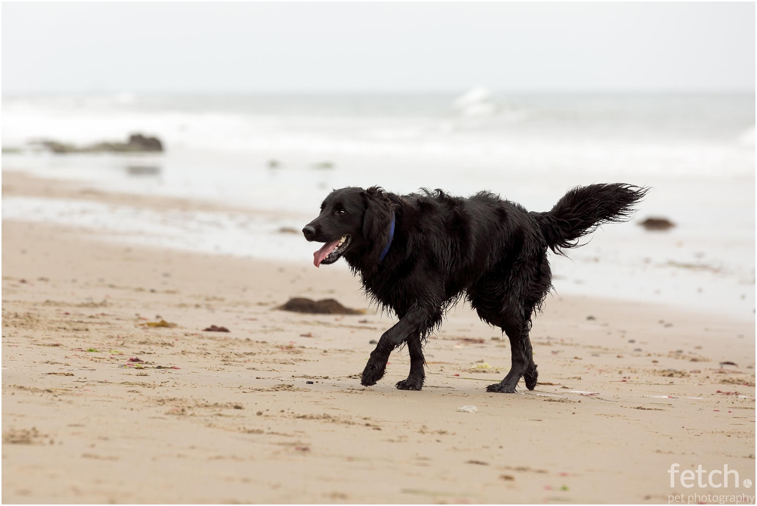black-dog-on-beach