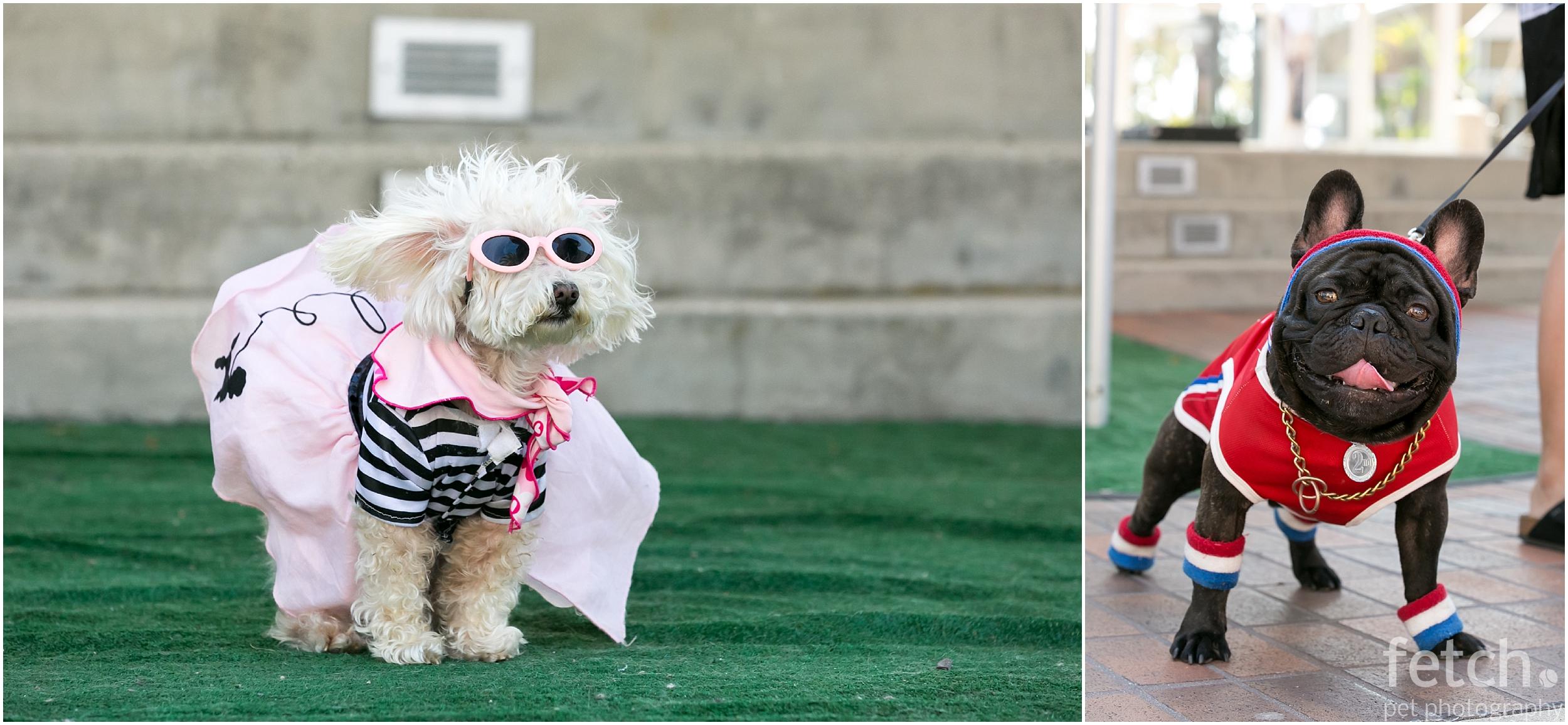 cute-dog-costume-contest