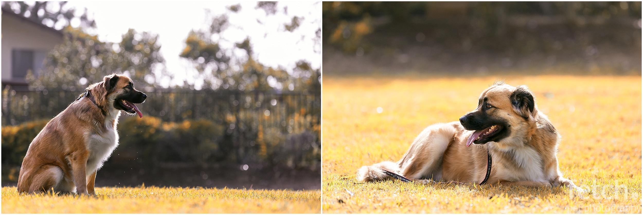 lifestyle-dog-photography-session