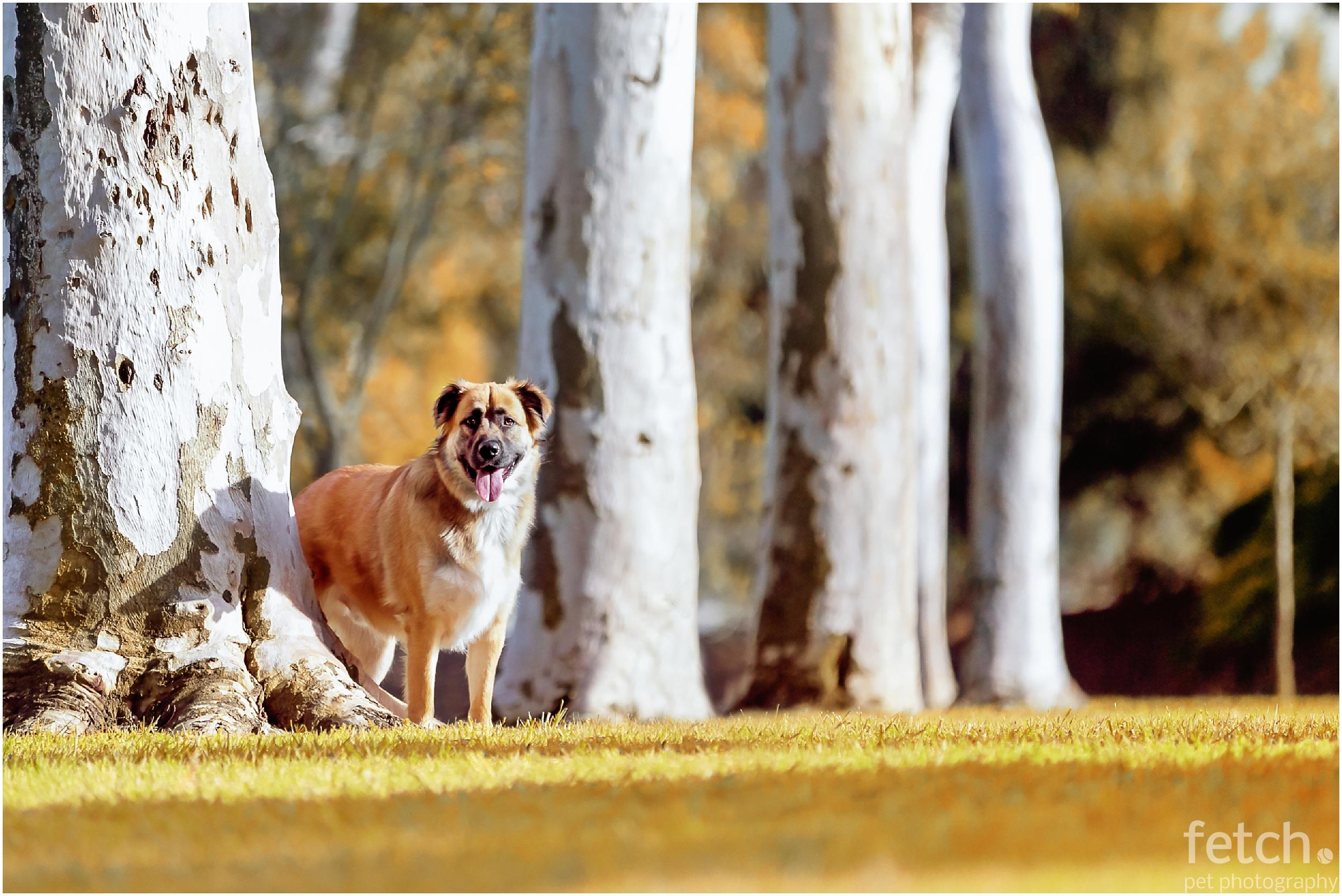 los-angeles-dog-photography